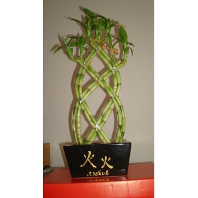 Фън Шуй: Бамбук за растеж, богатство и любов