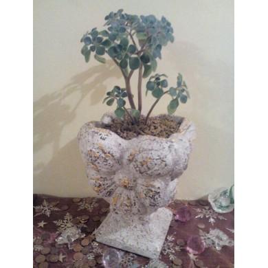 Фън Шуй Амулети - Дърво на парите